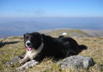 Polly (dog) at the summit of Beinn Sgritheall