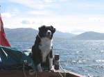 Polly (dog) on boat
